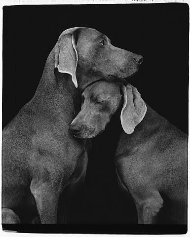 Adopt Daisy Mae On Hound Dog Basset Hound Basset Hound Dog