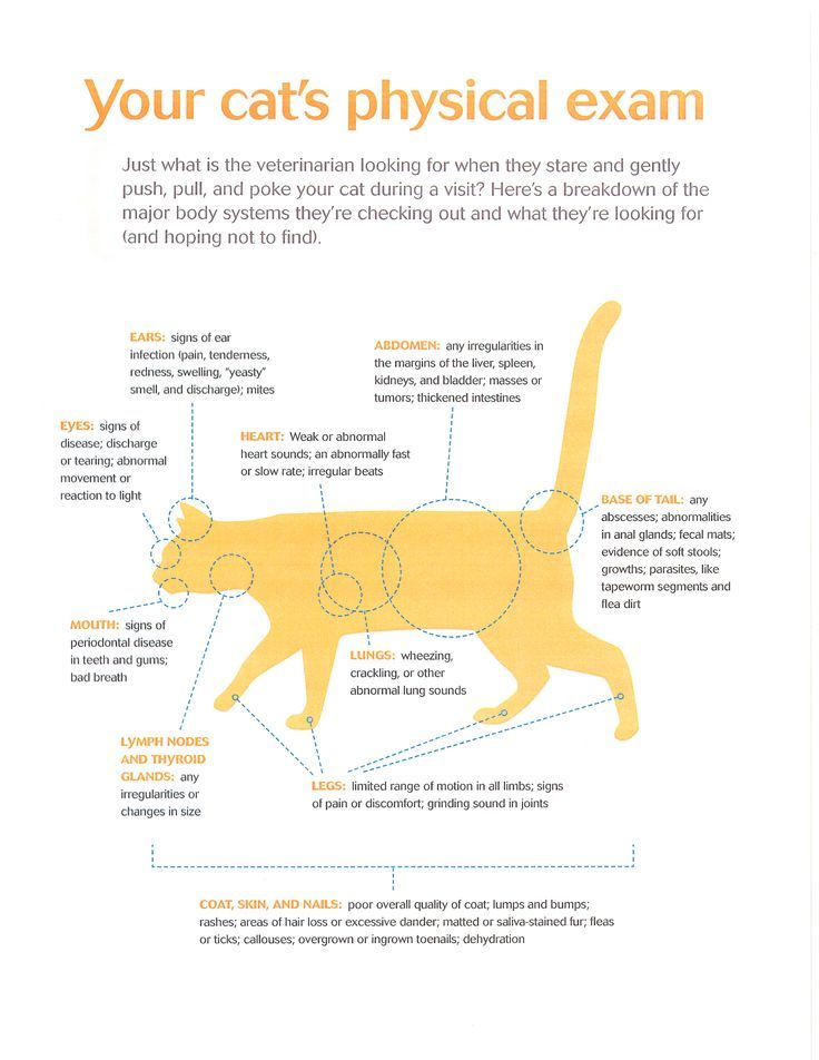 Everything that is checked during your cats physical exam. | Feline ...