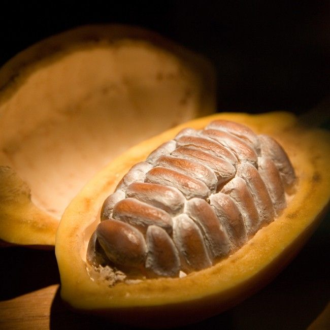 The cacao bean is actually the seed from the cacao pod.