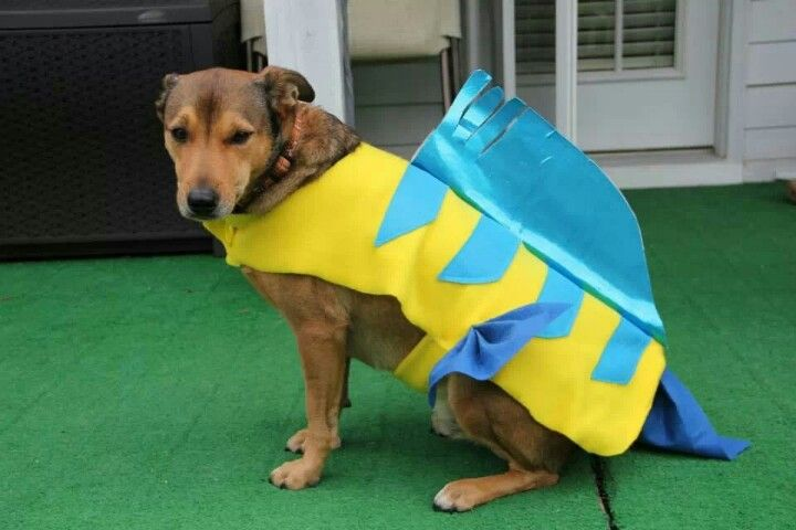055066eaeeac Flounder dog costume and my Oddy can wear this :D | Halloween ...