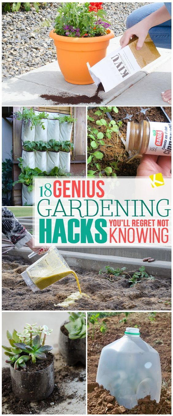 18 Genius Gardening Hacks You'll Regret Not Knowing #landscapingtips