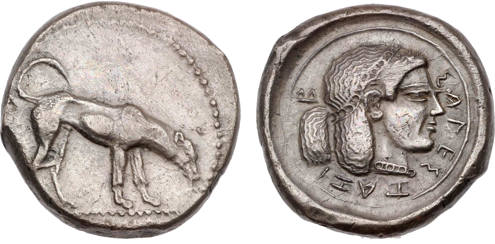 Didrachm of Segesta, AR, 8.70 g, 20 mm, Sicily, 480-460 BC. Dog standing to right on dotted line, head lowered. Beaded border. / Head of nymph Segesta to right; band in hair composed of row of circles between plain lines, a part of the hair drawn up and hanging out over band; similar row of circles between plain lines make up her necklace. Inscription in Greek. Plain border. Round incuse.