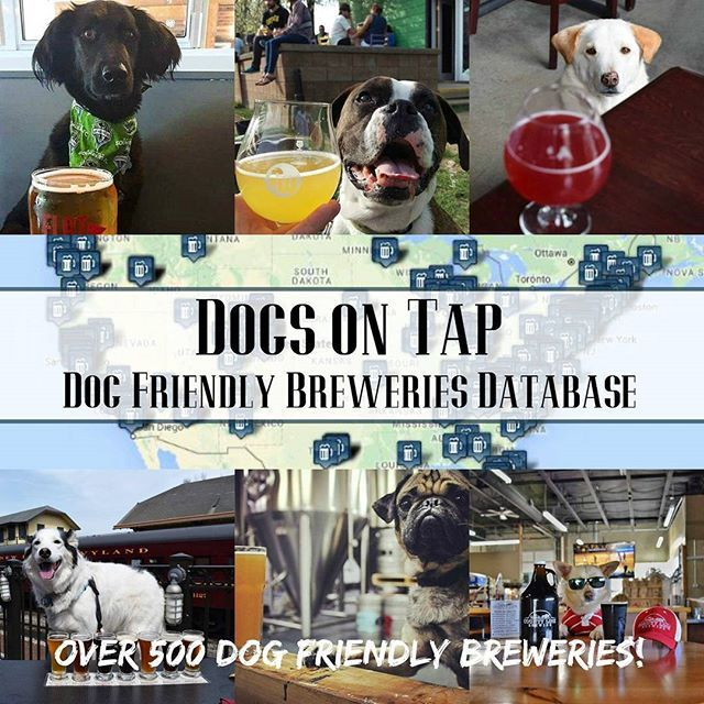 Dog Friendly Breweries Directory A Guide To Over 500 Different