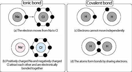 Ionic and covalent bonding are depicted in the picture bonds is attraction of  cation to an anion weak bond that can be broken up also rh pinterest