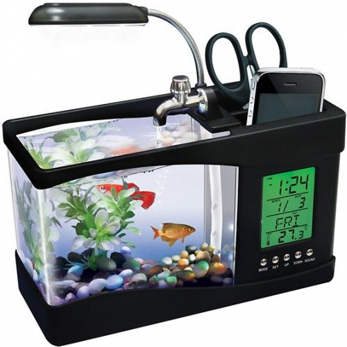 A Small Fish Tank I Can Put On My Desk When Finally Get Home Office