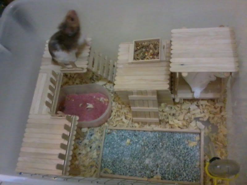 Popsicle stick creation hamster central hamster for Popsicle stick creations ideas