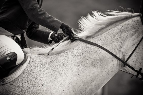 www.horsealot.com, the equestrian social network for riders & horse lovers | Equestrian Photography : Lisa Cueman.
