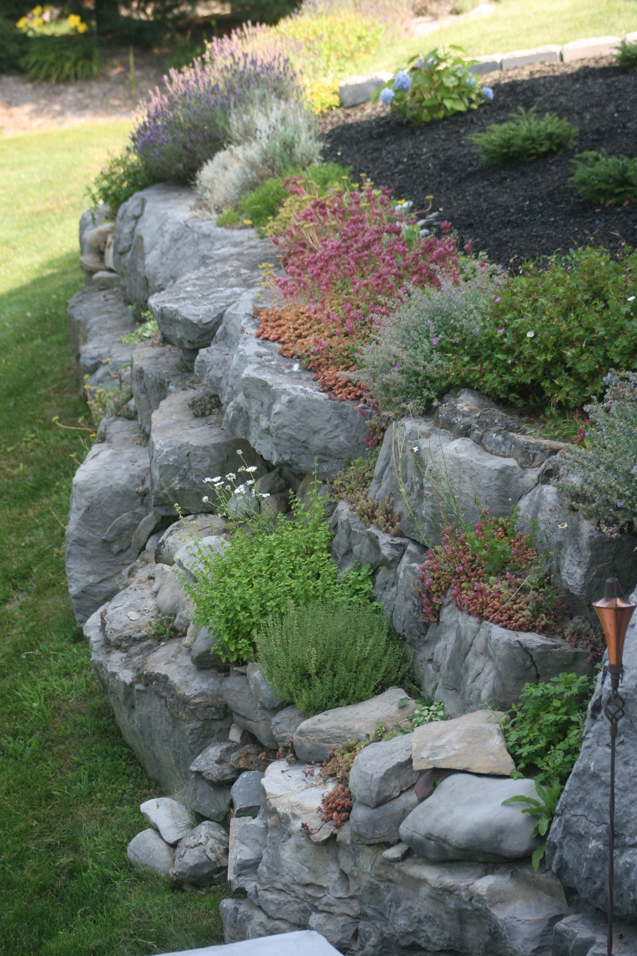 Rock Garden On Retaining Wall More Champ Gardens Rock Garden Design Rock Garden Landscaping Landscaping With Rocks