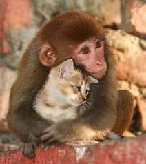 That kittty is so hugable The monkey is glad to have her as a friend.