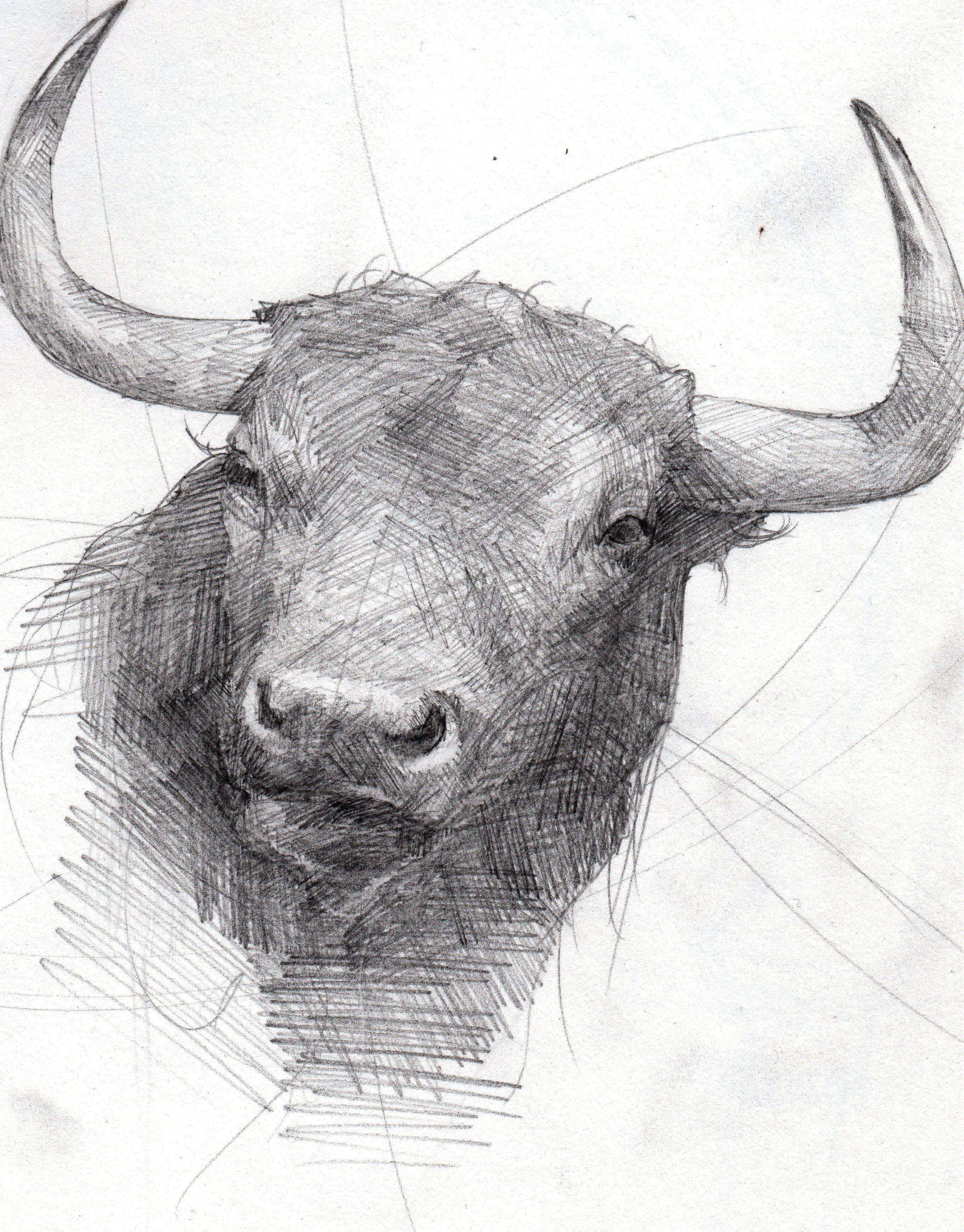Toro grafito juan ruiz j 39 aime peinture - Dessin de toro ...