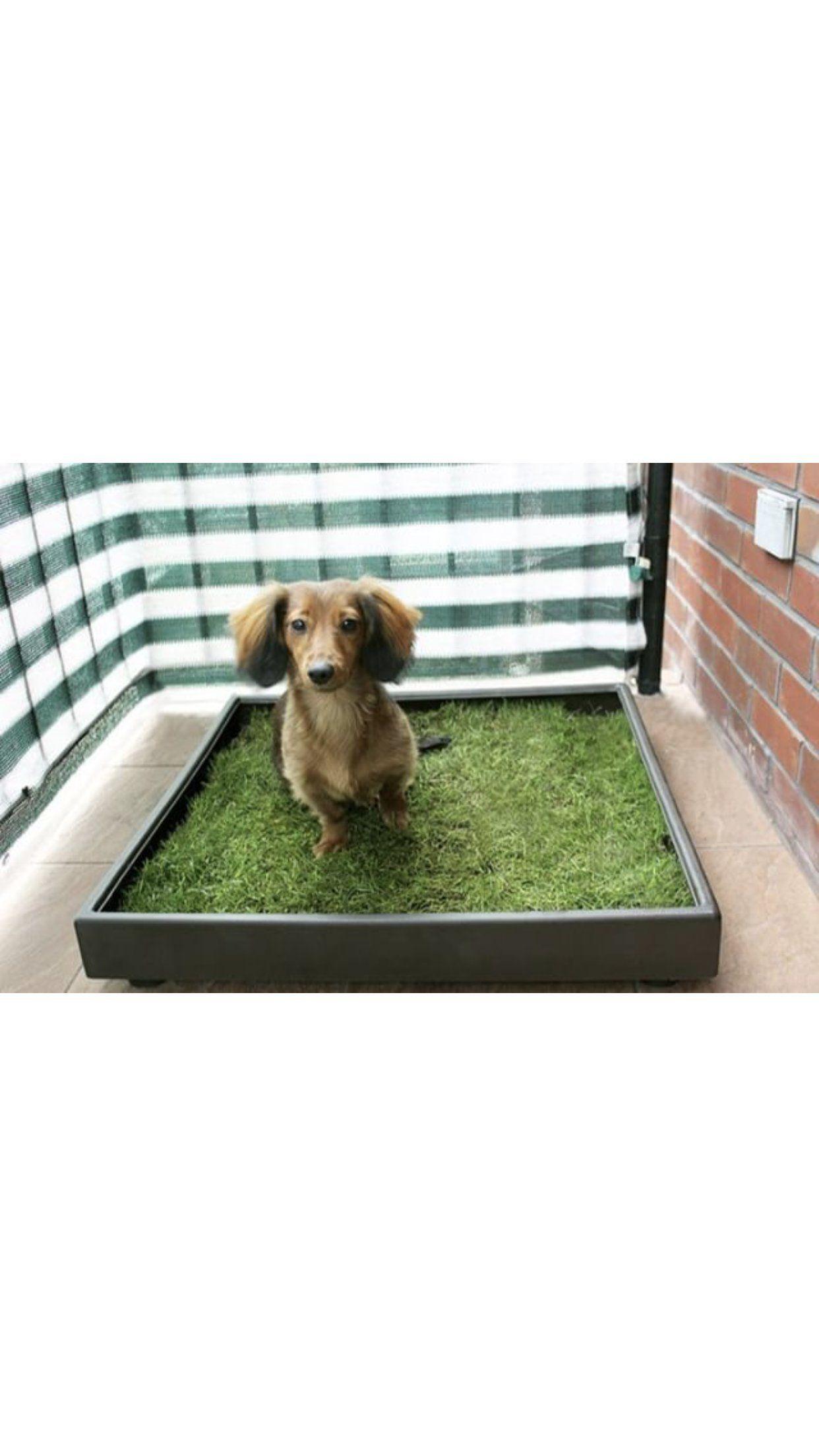 Patio Pet Life Farm Fresh Pet Grass Small You Can Get