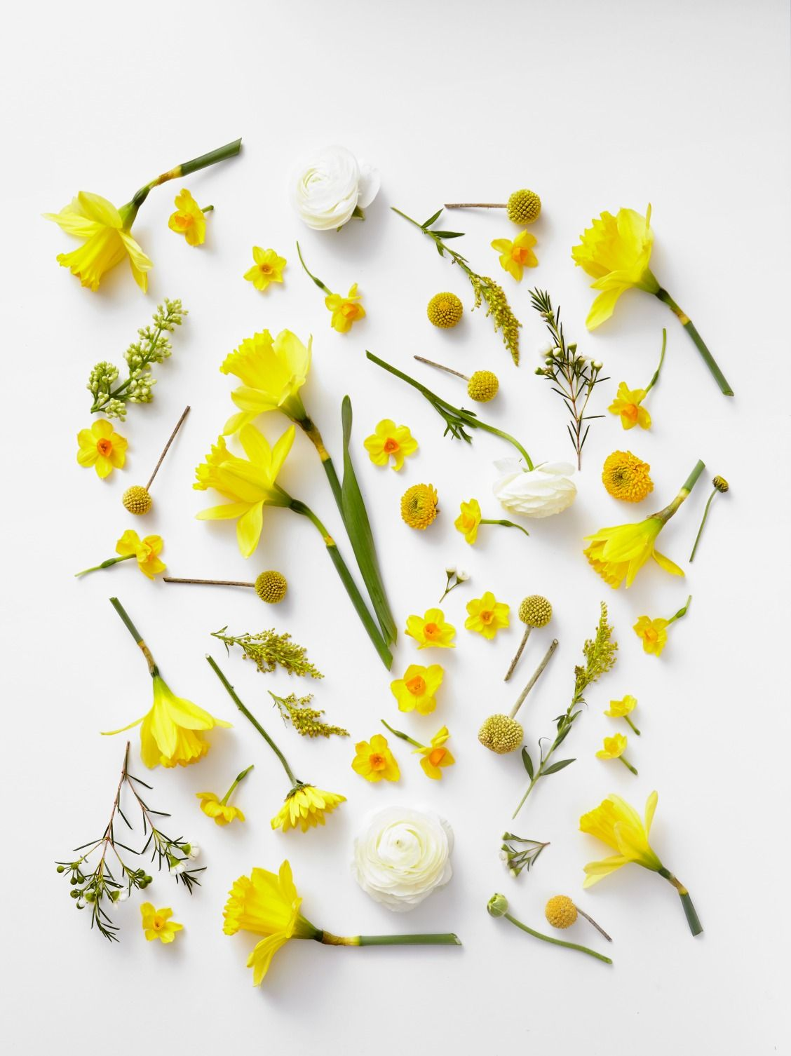 Pretty yellow flowers Yellow aesthetic, Yellow flowers
