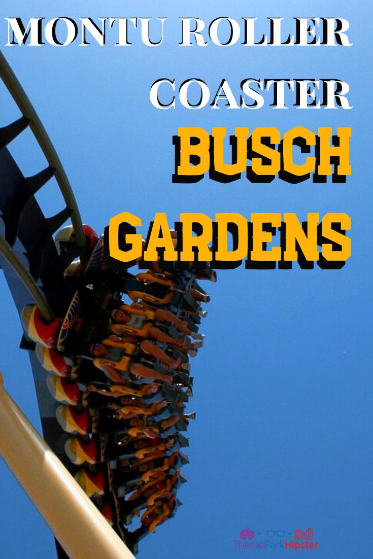 e137d4e4c8c33d20a11ae049370fb81b - How Busy Is Busch Gardens On Thanksgiving