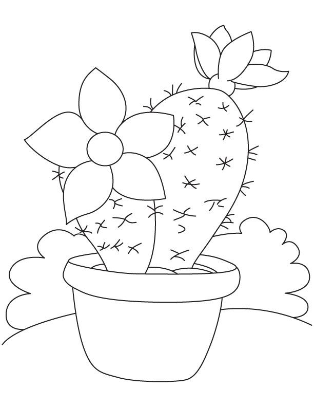 Large flower on cactus coloring page | Baby E | Pinterest | Cacti ...