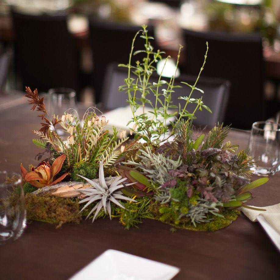 Living Centerpieces Plant Centerpieces Moss Wedding Decor
