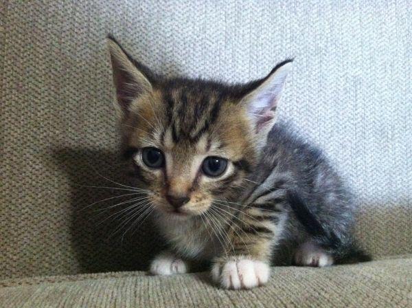 Hello Tiny Pets Puppies Kittens