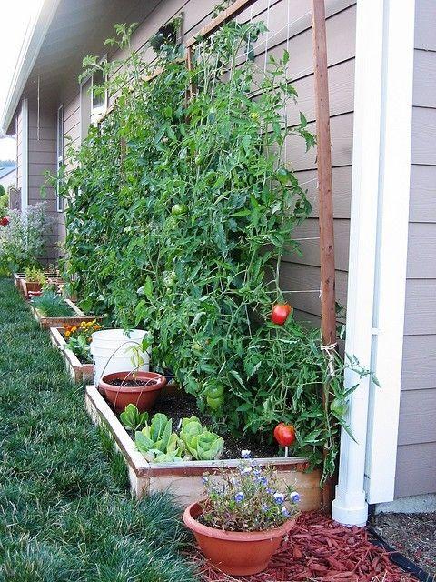 Mini Vegetable Garden Along A Foundation Wall