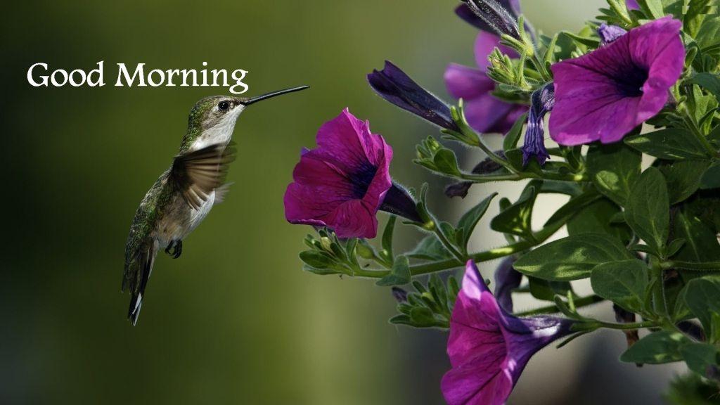 Good Morning Beautiful Birds Images : Good morning cute sms beautiful birds