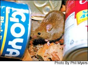 Rodent Proof Your Home Homesteading And Livestock Pest