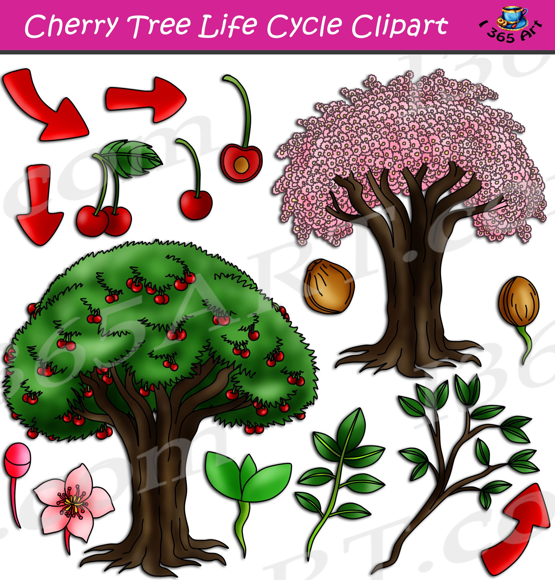 Cherry Tree Life Cycle Clipart Set Download Tree Life Cycle Cherry Tree Clip Art