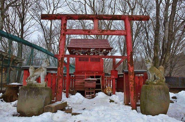 LUGARES Y VIAJES : Zao Fox Village, Japon