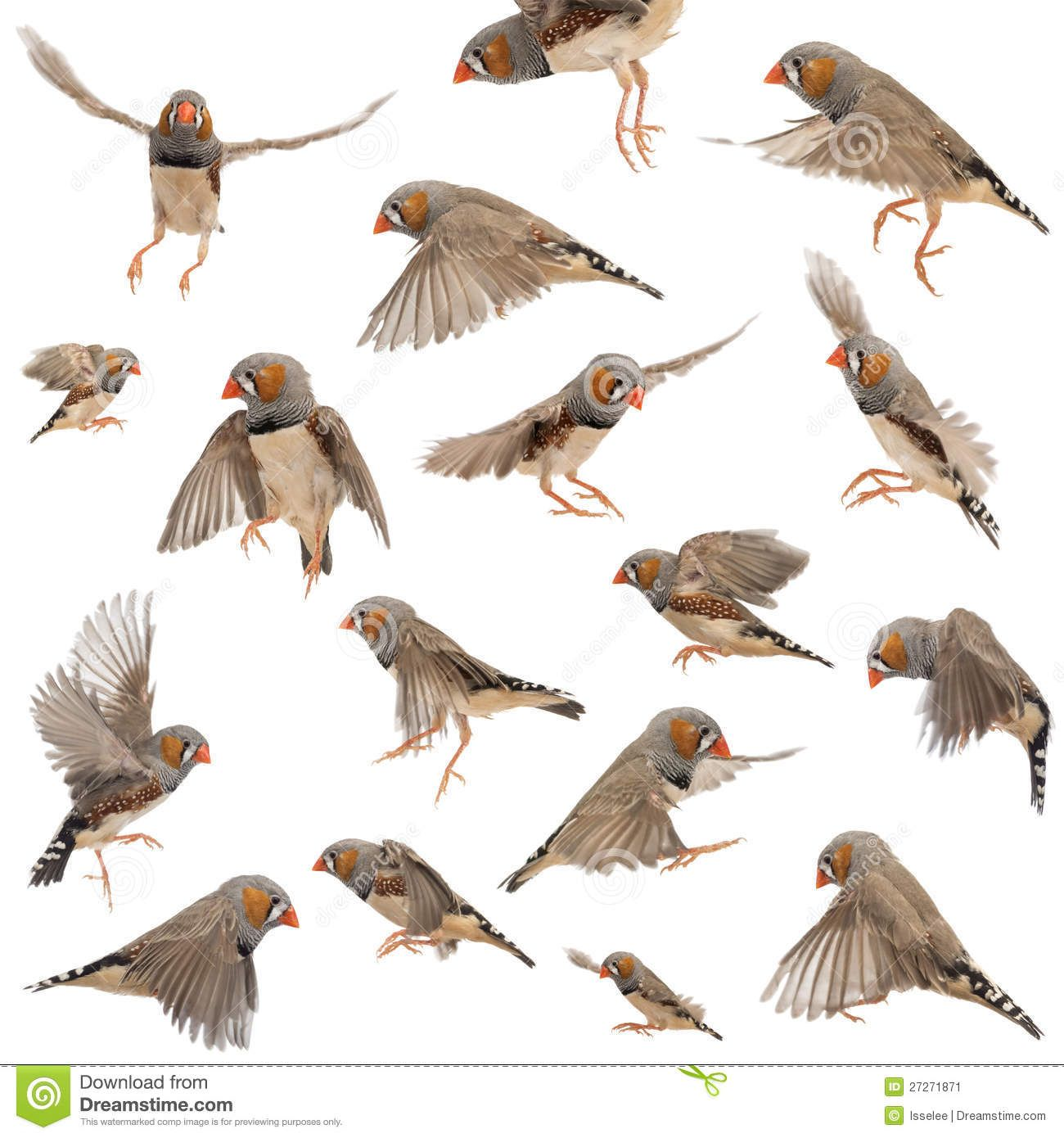 http://thumbs.dreamstime.com/z/composition-zebra-finch-flying-27271871.jpg