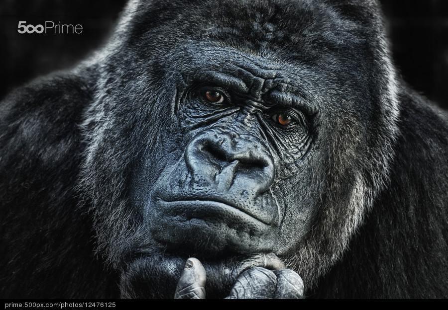 thinking about U by Joachim G. Pinkawa