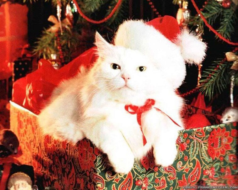 Cute Witte Kerstmis Cat Wallpaper Cats And Food Pinterest