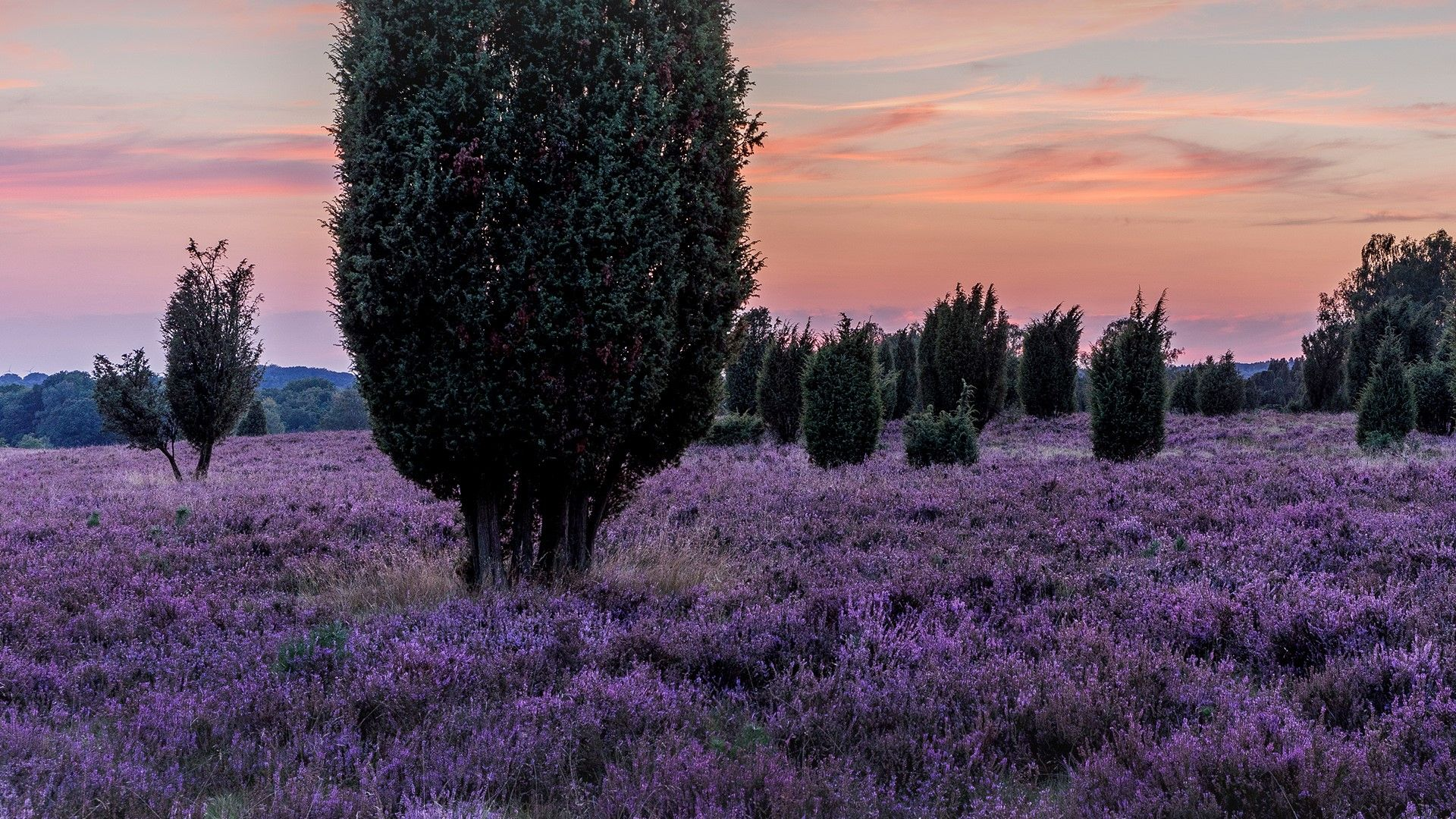 Luneburg Heath After Sunset Heath District Lower Saxony Germany Armchair Travel Places To Go Luneburg