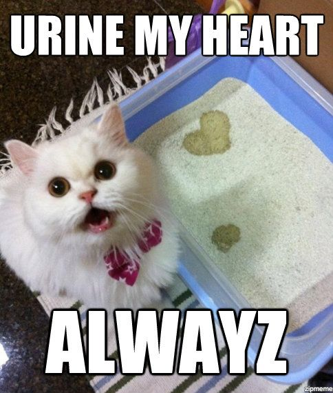 Cat Meme - Urine My Heart  Funny Cats And Memes  Funny -6066