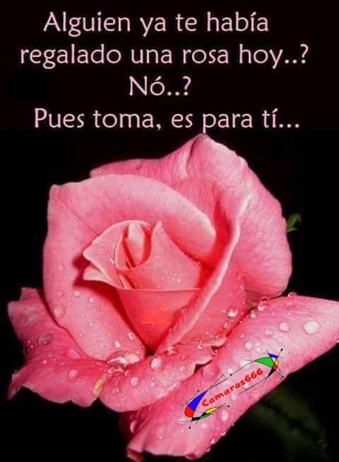 Una Rosa Para Tí Frases De Amor Y Graciosas Spanish Quotes