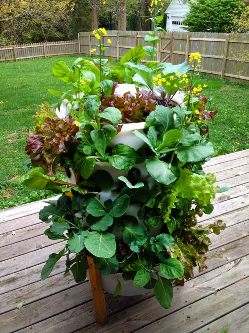 This combines vertical gardening and vermicomposting all in a 50gal plastic barrel - Garden tower vertical container garden ...