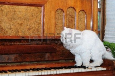 4378098-cat-playing-piano.jpg 400×266 pixels