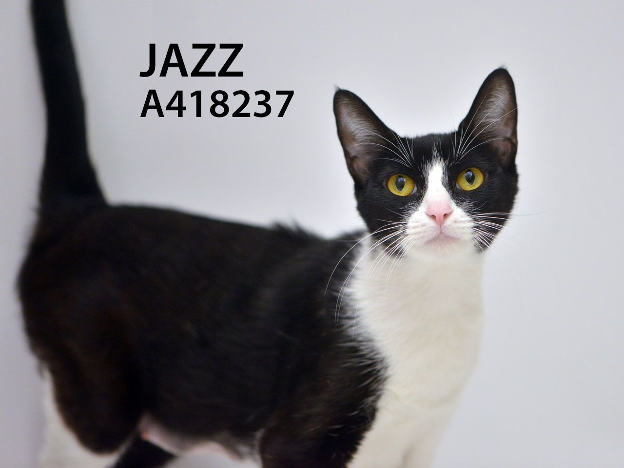 Who Doesn T Love Some Nice Quiet Jazz This Sweet Friendly Lively Playful Adorable Teenage Kitten Wants To Make Music In Your Cats And Kittens Cats Kitten