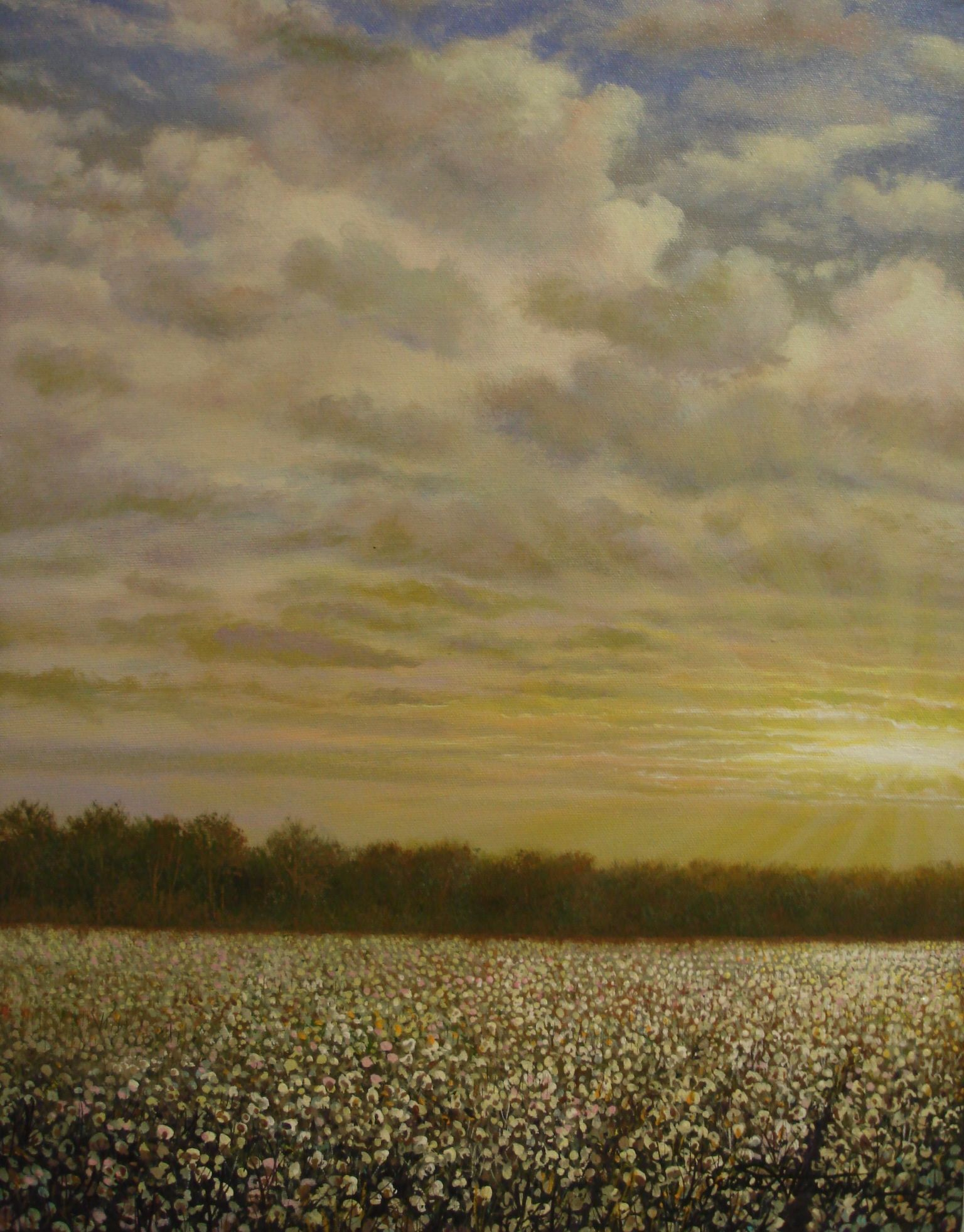 Mississippi Delta Cotton Field When I Was A Litle Bittyy Baby My Mama Would Rock Me In Mycraddl The Beautiful South Adventure Is Out There Mississippi Delta