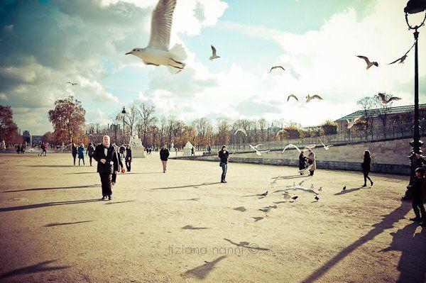 tuileries... #paris #seagull