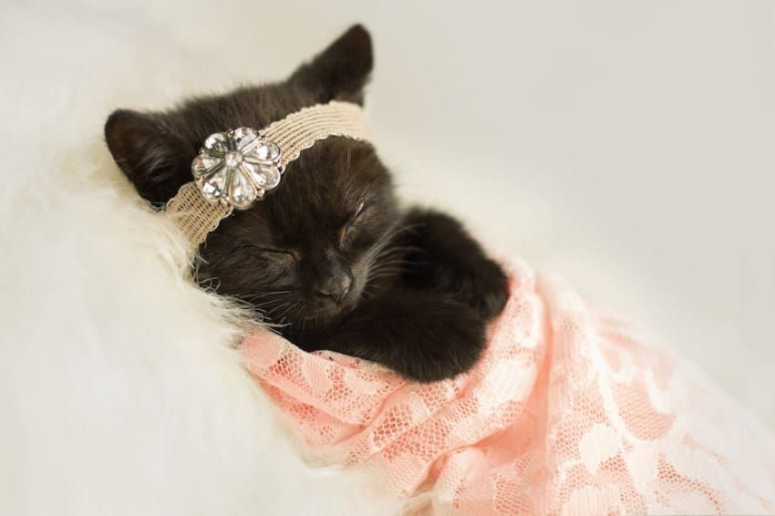 World S Most Patient Kitten Poses For Newborn Photo Shoot That S