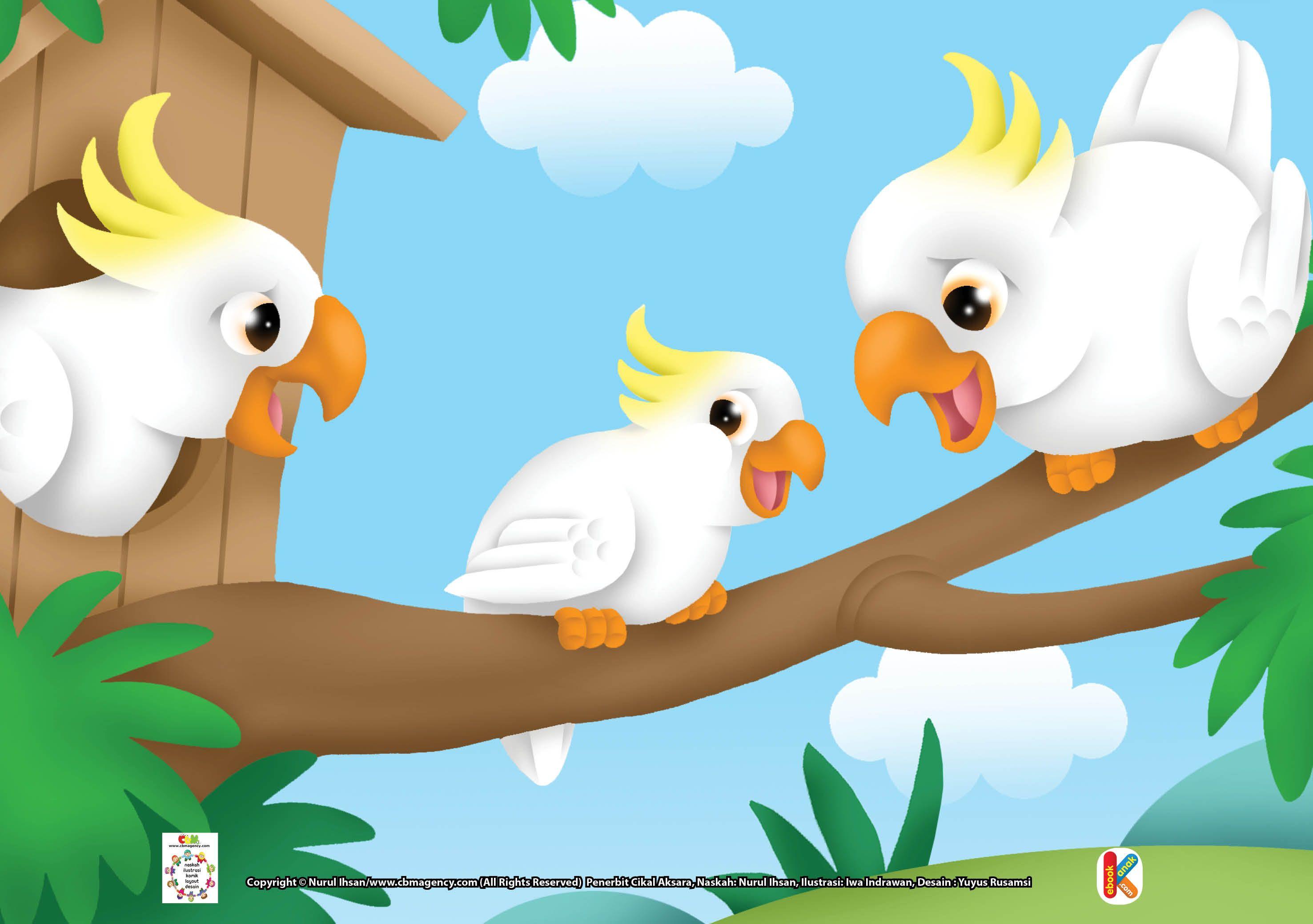 Gambar Download Mewarnai Burung Kakak Tua Kakaktua Pintar Peniru