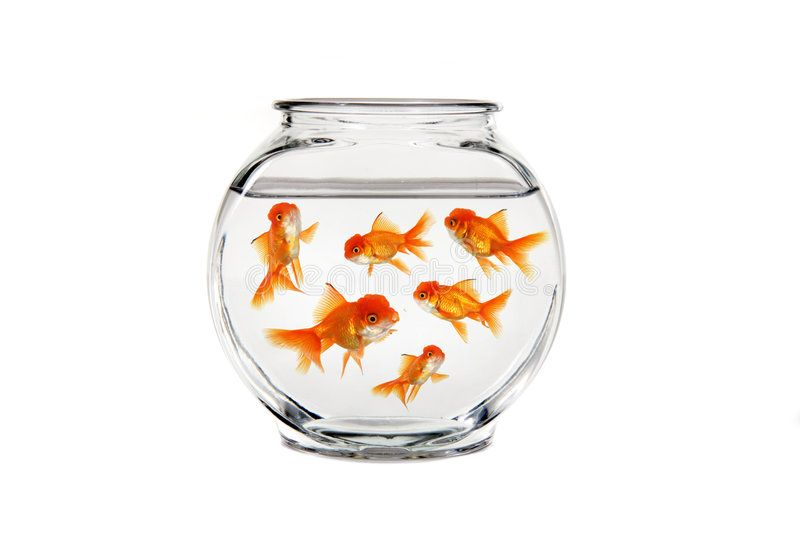 Goldfish Bowl Overcrowded Gold Fish In A Bowl Sponsored Bowl Goldfish Overcrowded Fish Gold Ad Goldfish Bowl Goldfish Fish Bowl