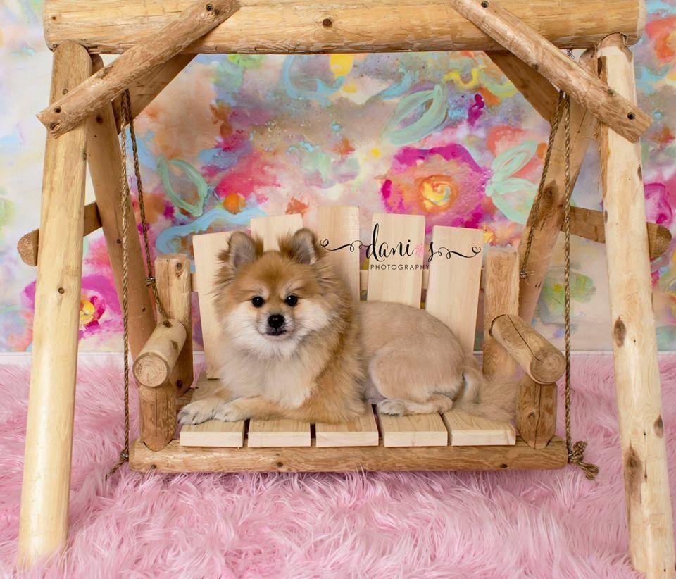 Dog , Cat , or Pet cedar log porch swing .. ( Bed chair