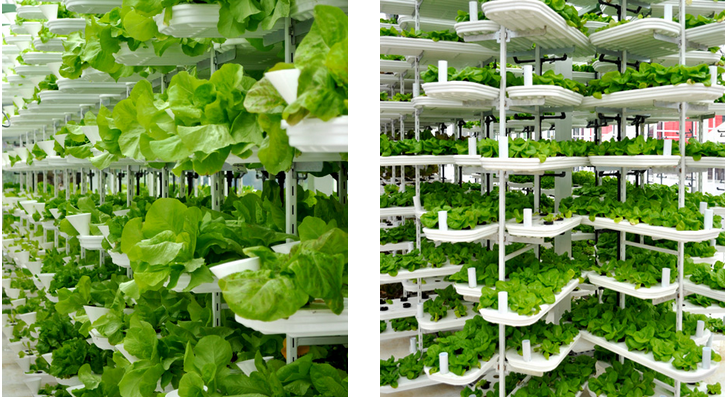 Efficient Hydroponics Vertical Farming Who Needs Space For A - Rooftop vegetable garden ideas