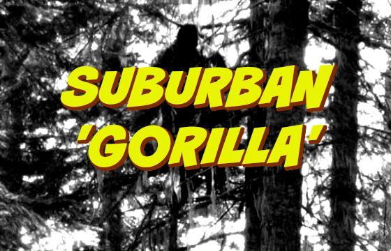 Suburban 'Gorilla' | Gorilla, Suburban, Paranormal ...