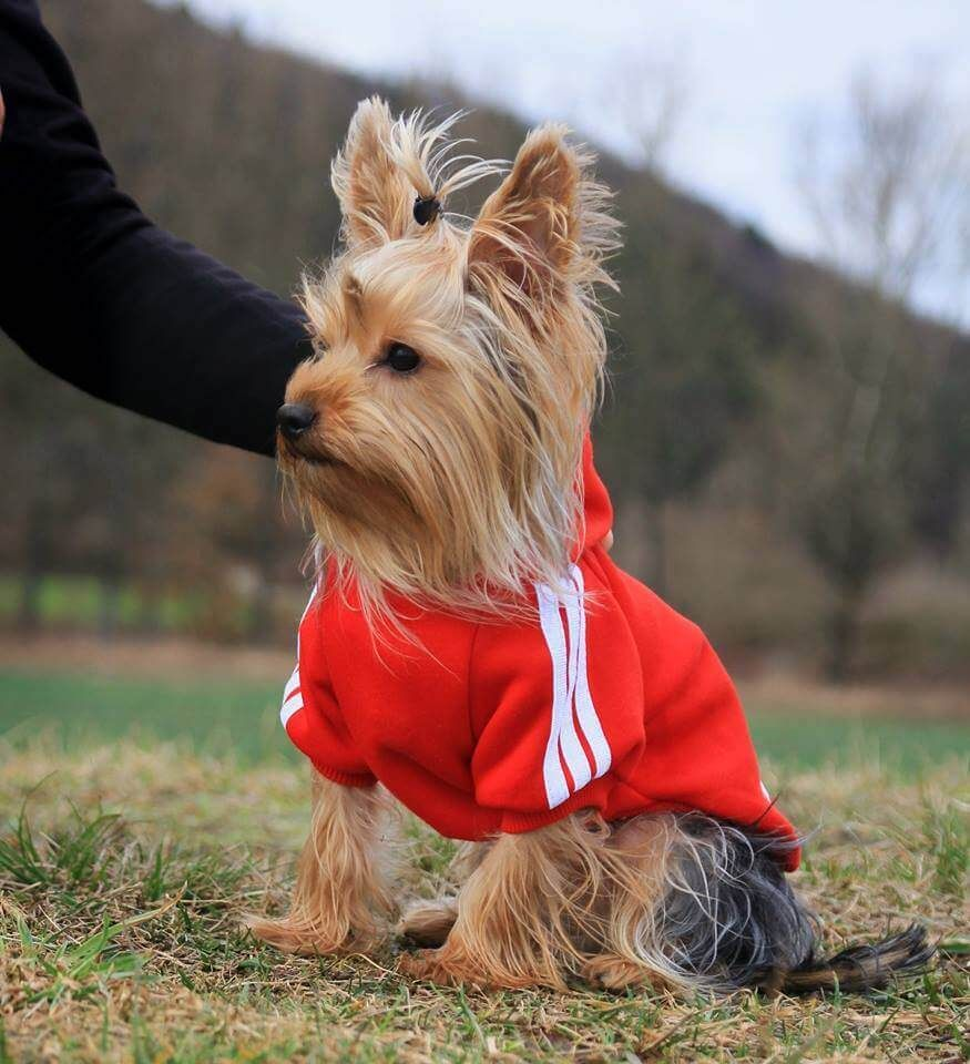adidas bluza dla psa