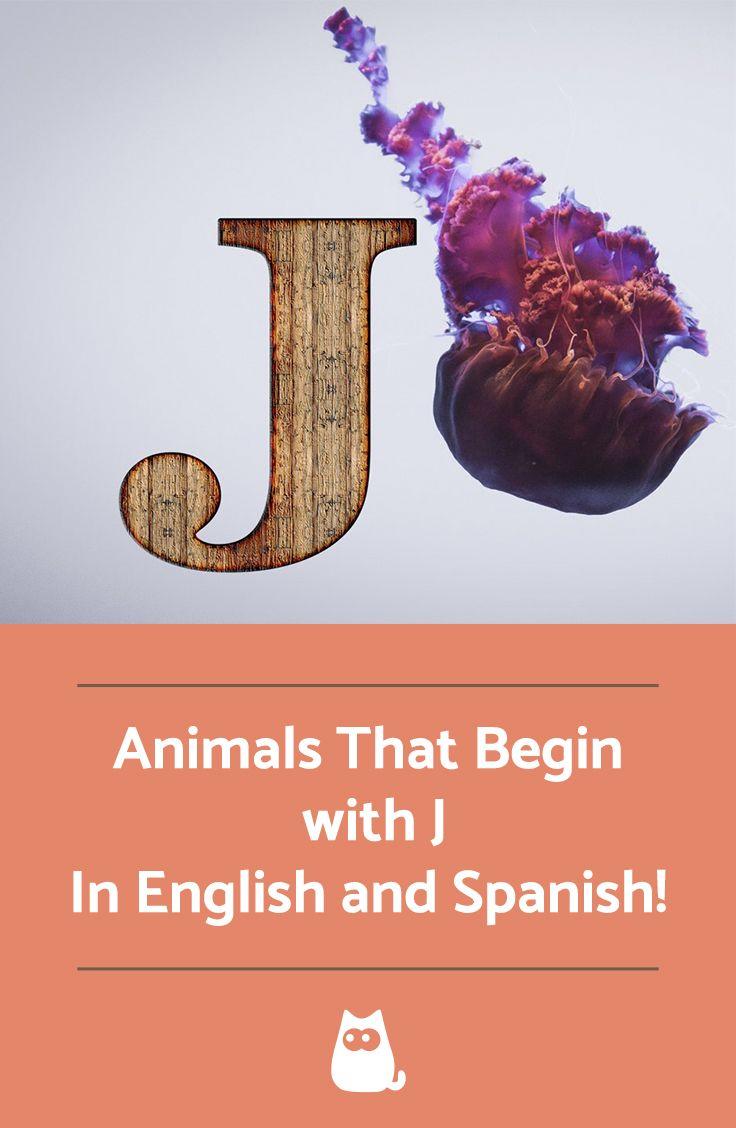 10++ Animals that start with g ideas in 2021