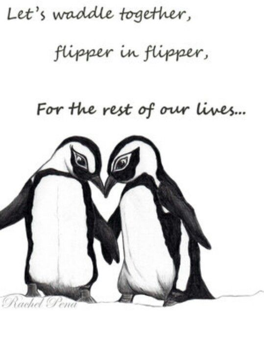 Pin By Wanda Lee On Animals Pinterest Penguin Love Penguins And Gorgeous Penguin Love Quotes