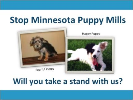Stop Minnesota Puppy Mills Puppy And Kitten Mills Stop Them Now