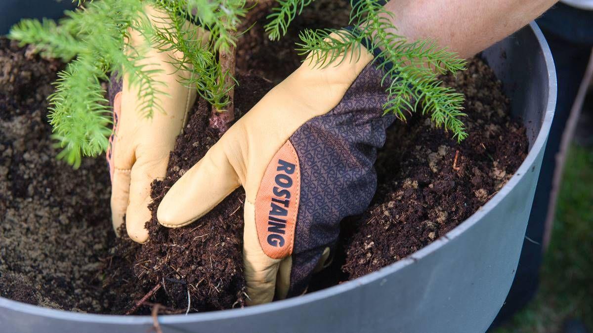 Les Talents en main, Rostaing innove avec les gants Gamme Pro Jardinage Sequoia
