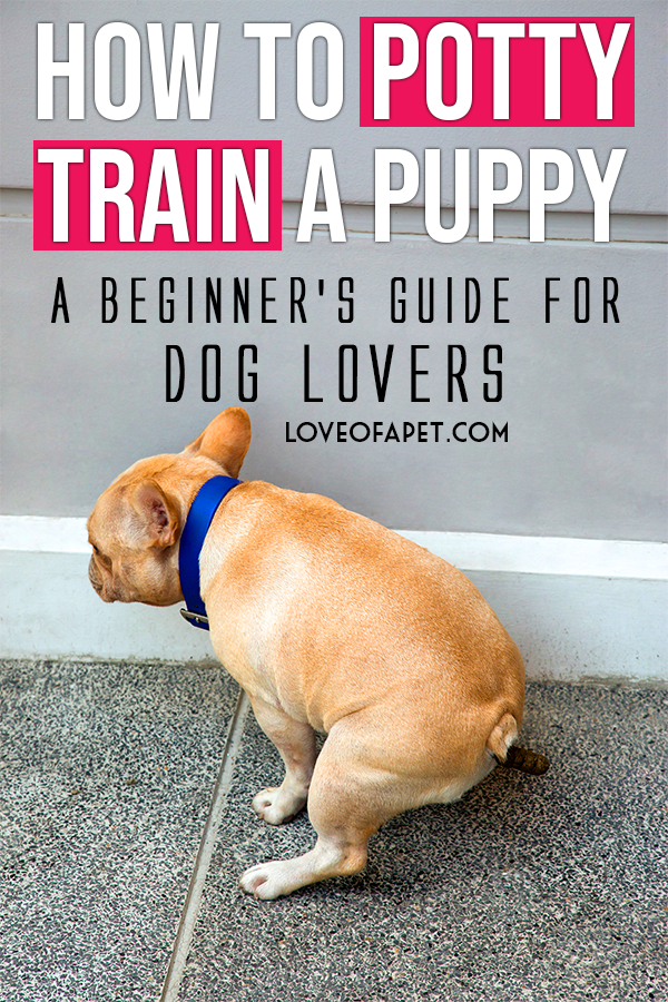 How to Train a Dog For Beginner Pet Owners