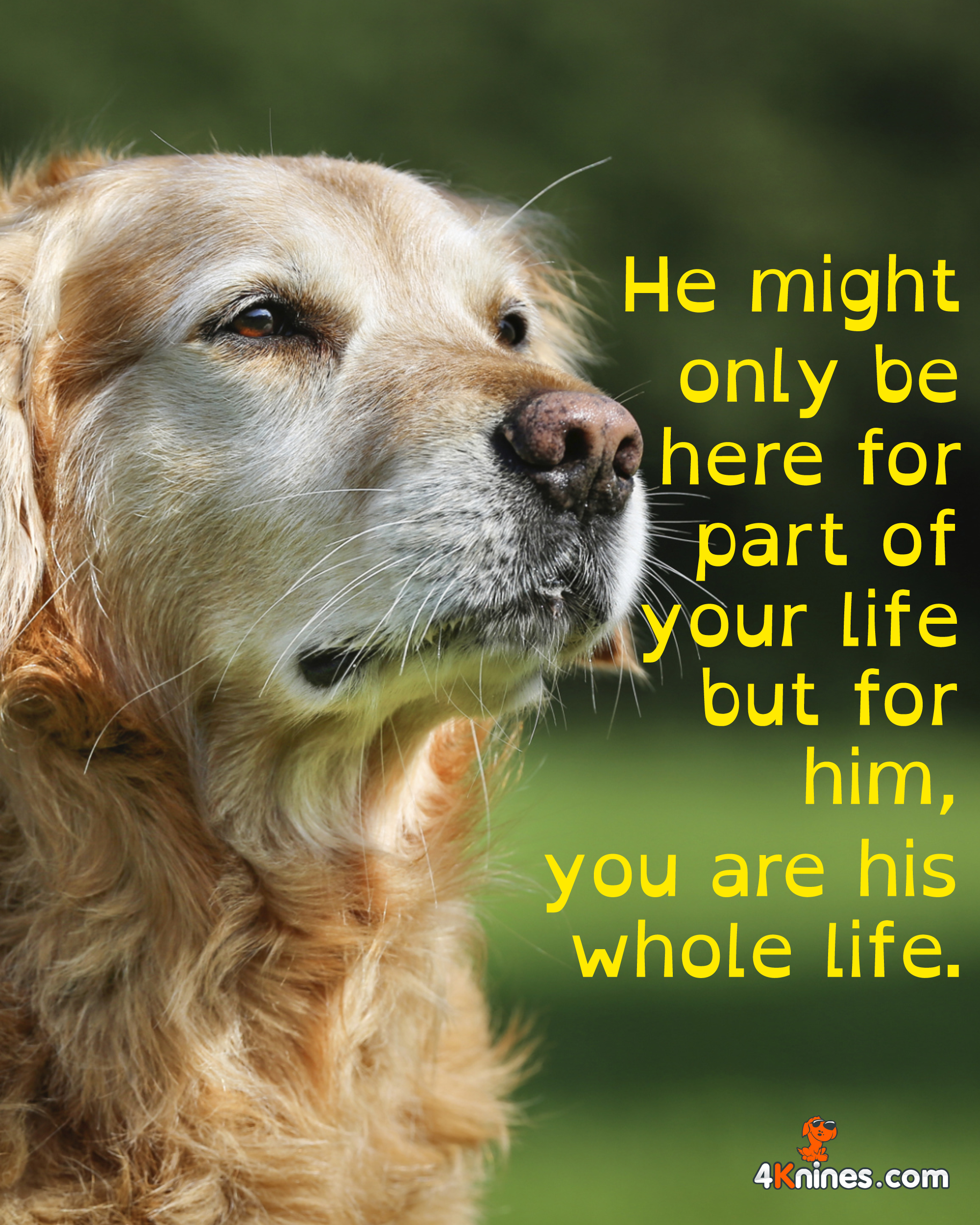 For your dog, you are his whole life. 4Knines