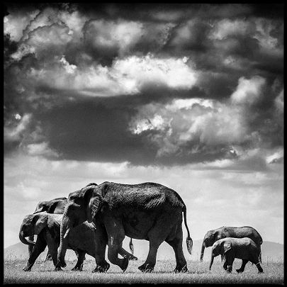 Under the clouds II - Laurent Baheux - http://www.yellowkorner.com/photos/1475/under-the-clouds-ii.aspx